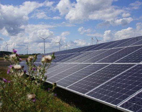Windpower-GmbH-Artenvielfalt-im-Solarpark-2-Foto-Windpower-GmbH