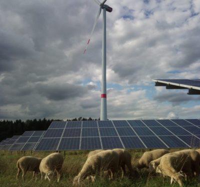 Windpower-GmbH-Artenvielfalt-im-Solarpark-3-Foto-Windpower-GmbH